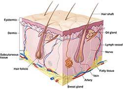شناسایی انواع پوست